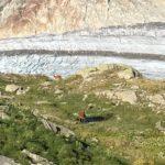 Hirschkühe mit Gletschervorliebe