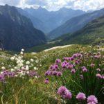 Schmucke Val Lavizzara