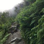 Regenwald auf 2000m?