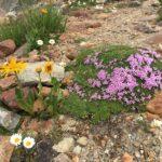 Blumenkissen, von Mutter Natur bestickt